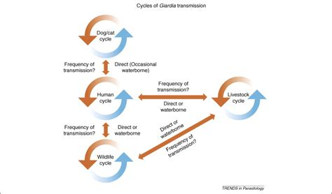 Variation in Giardia: towards a taxonomic revision of the